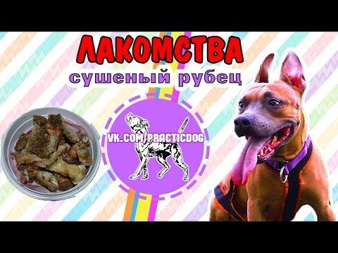 Лакомство для собак своими руками | дрессировка собак | питбуль