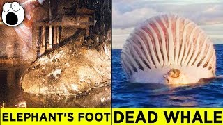Top 10 Alarming Discoveries You'll be Glad You Didn't Make