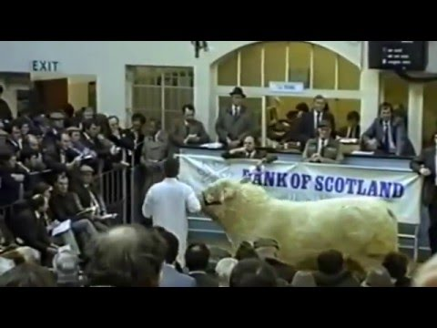 Perth Bull and Livestock Auctions