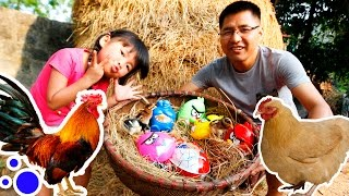 Chicken lays egg – Open Spiderman Eggs Surprise vs Open Angry Birds Eggs Surprise | CreativeKids