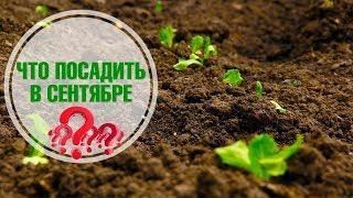 Что посадить в сентябре в теплице и огороде?