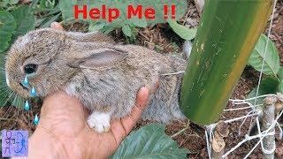 Giải Cứu Thỏ Con Thoát Khỏi Cái Bẫy Chết Người Và Sự Thật Khó Tin.Bẫy Thỏ = Ống Tre.Help Wild Rabbit