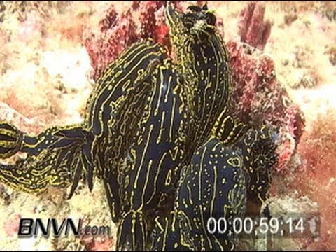 3/28/2004 Gulf Of Mexico Artificial Reef and Nudibranchs