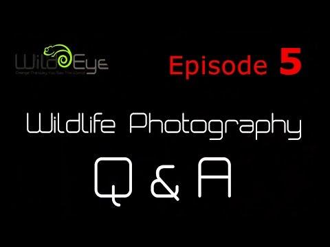 Wildlife Photography Q&A:  Episode 5