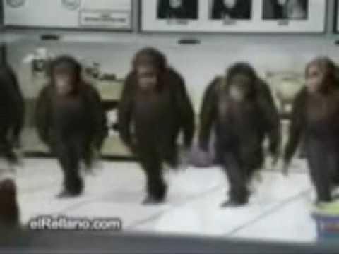 Tallava majmuna nallabni