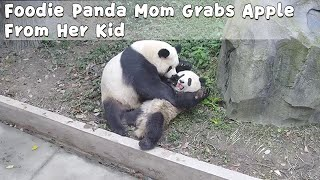 Foodie Panda Mom Grabs Apple From Her Kid | iPanda