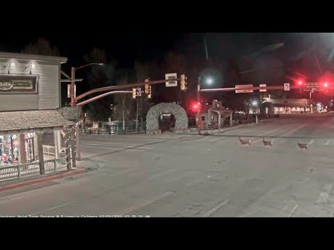 Jackson Hole WY Town Square 🌲deer are afraid of the police_02/01/2018