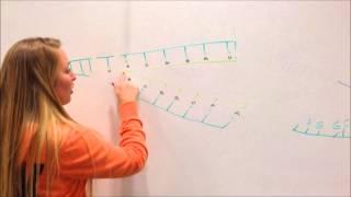 DNA replication, transcription, translation