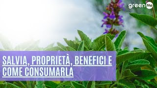 Salvia, proprietà, benefici e come consumarla