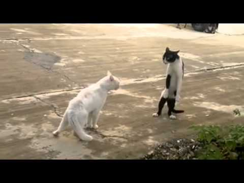 stand up cat on two legs   youtube