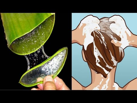 How to Make Aloe Vera Shampoo for hair Growth