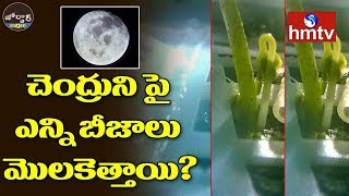 China Has Grown Plants on the Moon | Jordar News  | hmtv