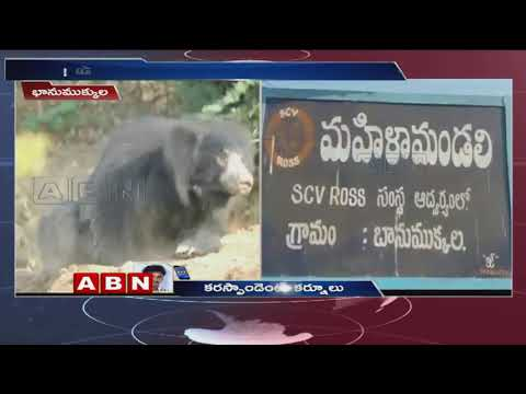 Bear Roaming in Villages at Kurnool, Local Fears | ABN Telugu
