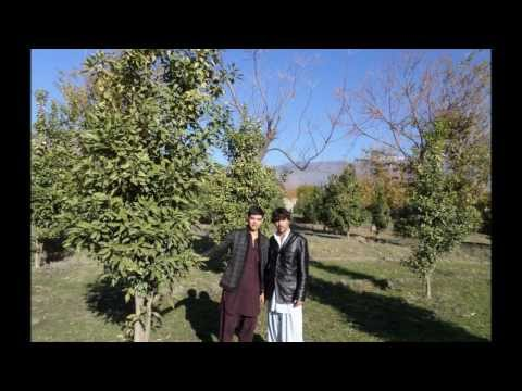 Bahram Jan New Songs 2014 Hd Best Poshto Song Of 2014 video