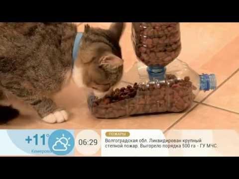 Автоматическая кормушка для котов своими руками