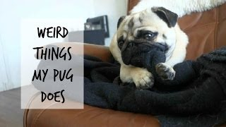 Weird Things My Pug Does