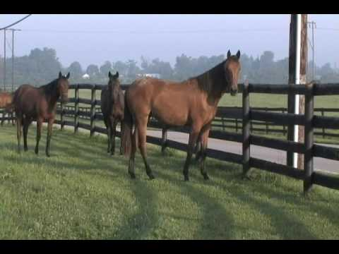 Horse Country - Paris, Kentucky - Home of Secretariat