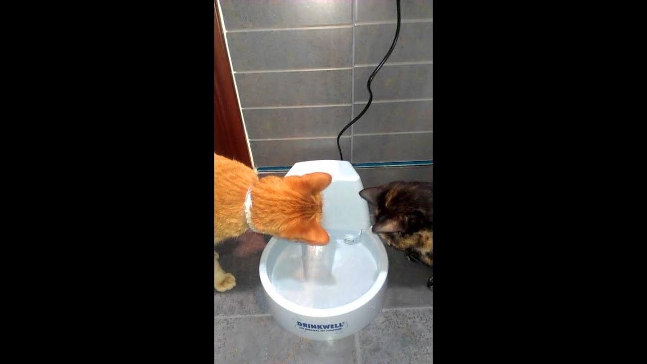 Fuentes Agua Para Gatos Gatos Con Fuente de Agua