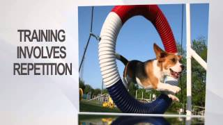 9 Tips For Dog Obedience Training - Dog Barking, Crate Training, Tricks etc