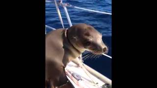 Cute Baby Sea Lion