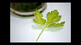 Propiedades medicinales del perejil, para adelgazar. Petroselinum crispum
