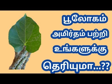 Spam Report Meaning In Tamil Spam Report Meaning In Tamil
