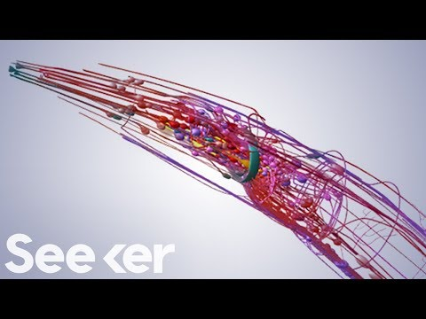 Scientists Put the Brain of a Worm Into a Robot… and It MOVED