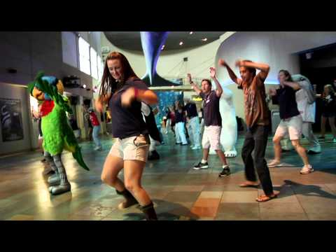"Aquarium of the Pacific s ""Call Me Maybe"" Parody"