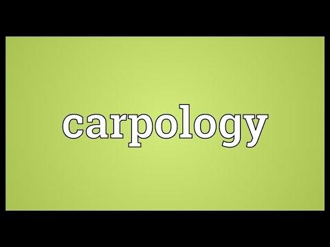 Header of carpology