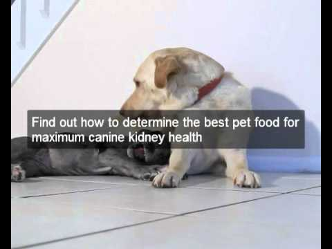 Help to reverse kidney disease in dogs! Great scientific diet dog food fights kidney disease in dogs