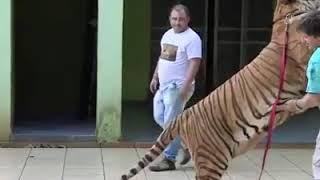 The pet animals at homes