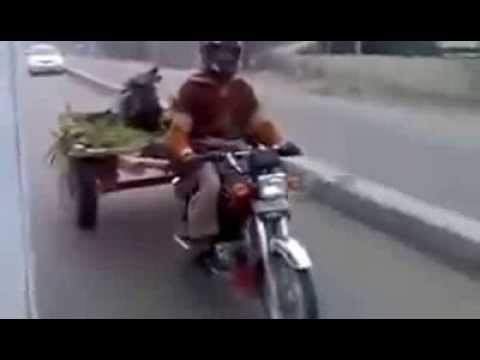 Funny Video In Pakistan video