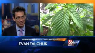 In Own Words: Evan Falchuck on marijuana