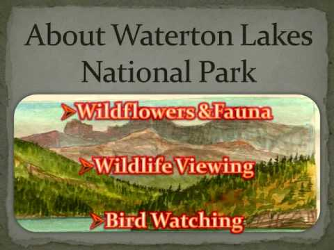 Nature exploration in waterton