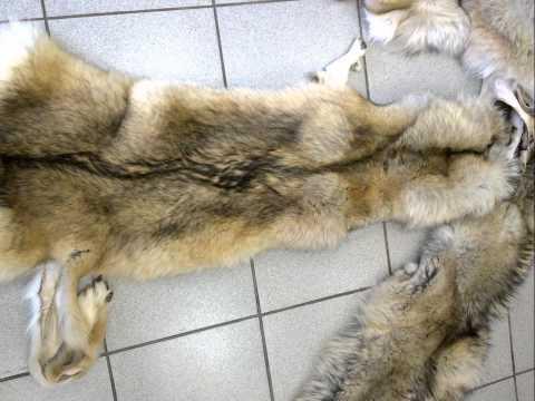 Шкуры волка выделанные