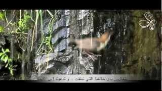آيات..كلمات وأداء: ناصر السعيد / مونتاج: أمل الحمود HD