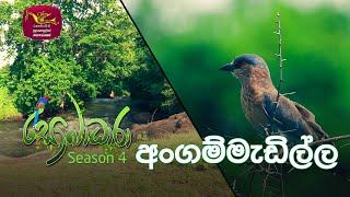 Sobadhara - Sri Lanka Wildlife Documentary | 2020-08-07 | Angammedilla National Park