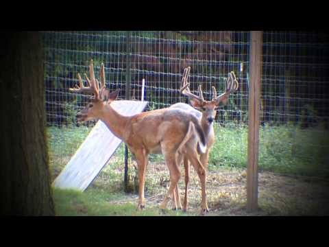 Going to the Xtreme | Deer & Wildlife Stories