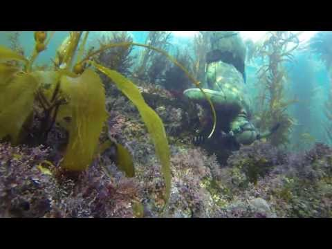 GoPro: Lobster Dive