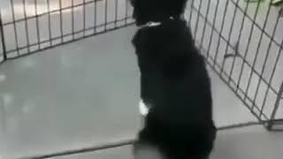 Vídeo engraçado