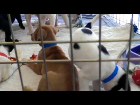 Florida Fine Cars Humane Society Puppy Adoption Day