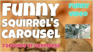 Funny squirrel's carousel fail 🔸 7 second of happiness FUNNY Video 😂 #360