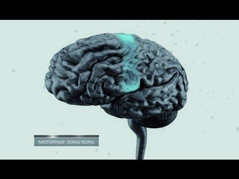 Тайны мозга. Фильм 2