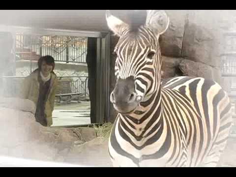 王子動物園 北園(ほくえん)リニューアル