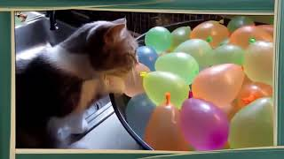 Cats and Balloons! Funny animals
