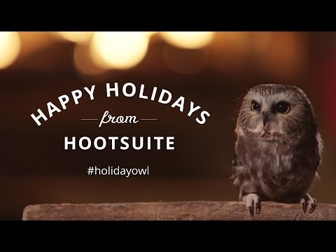Yule Log Holiday Owl (Hootsuite)