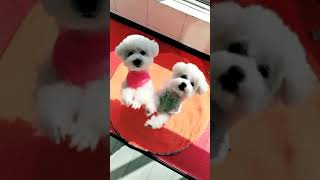 Look at these cute and funny puppies dogs 1697