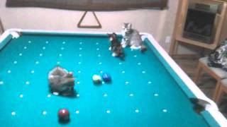 Watch Cat Stevens Kitty video
