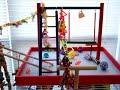 Lovebird Cage Set-Up