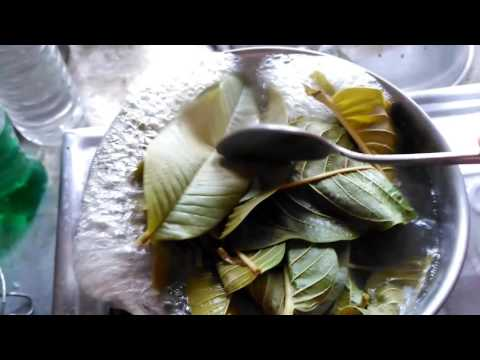 DIY: Guava leaves for hair growth   Homemade hair growth solution   Stop Hairloss Full HD